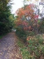 Fall Colours by herenity86