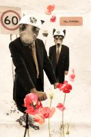 tall poppies by iforgotmypassword