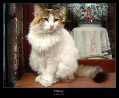 Whitish by cat-lovers