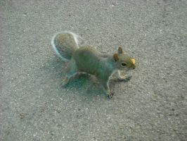 Squirrel3 by Feawing