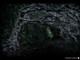 The witches tree by shadowfoxcreative