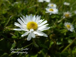 In Bloom by CounterCanterPhotos