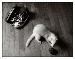 White Ferret by Reinhander