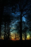 set sun forest by thephotographer0