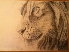 Lion by Gemma-Jackson