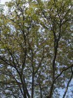 Just trees by wooyke