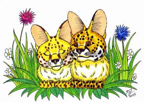 A Couple Of Servals by Goldy--Gry