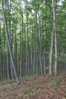 Forest 8 by sacral-stock