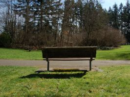Park Bench with Tree Grove by happeningstock