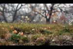 Last days of autumn by tomsumartin