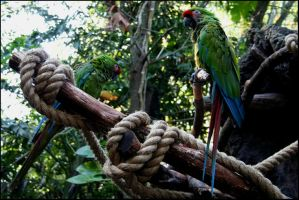 Pair of Parrots by Project-27