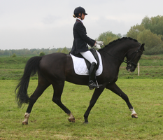 Dressage stock 12 by ByMelody