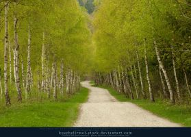 Spring Path 02 by kuschelirmel-stock