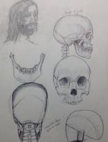 Skull Studies by coolquack