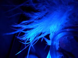 Blue colored feathers by petrop92