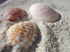 Shells on the beach by SinbadHiccup