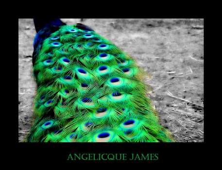 Peacock IV by angelicque