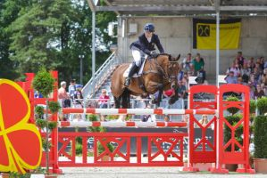 Irish Sport Horse Show Jumping by LuDa-Stock