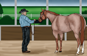 2014 World Western Finals - Halter by FallbrookeEC