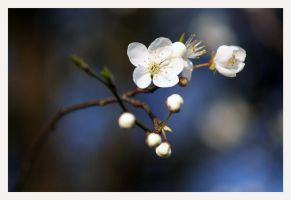 spring arrives early... by JacquesPhotography