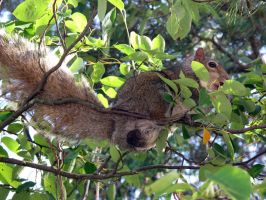 Why do squirrels need big nuts by KMourzenko