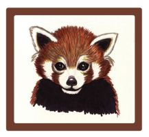 Red Panda Sketch by GwenStacy
