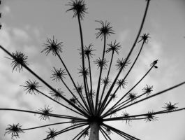 plant thing black and white 3 by hazellucy