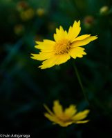 Nature Shots 5 by dargor1406