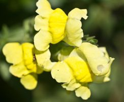 Yellow in a different shape.. by drewii57