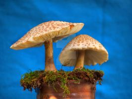 HDR Mushrooms 6 by Dracoart-Stock