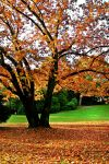 Autumn, wish you'd come back by BellPhotography