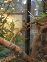 Crested Iguana by TheBuggiest