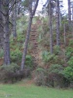 The forrest stairs by raewhitewolf