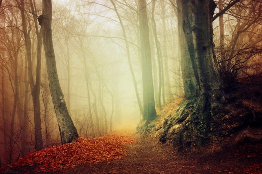 If These Trees Could Talk XXVIII. by realityDream