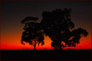 Before dawn - Deniliquin 1 by wildplaces