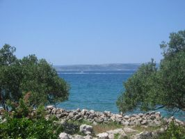 Olive trees and the sea by Hrivalasse-stock
