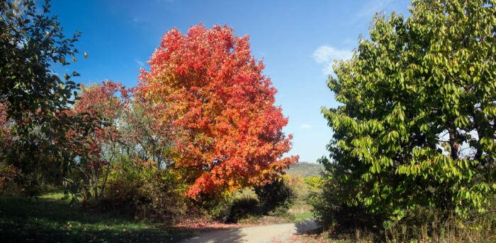 Autumn Colors at LittleTree Orchards by MrDSir