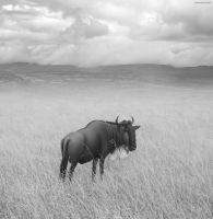 Once upon a time in Kenya - 4 by BenHeine