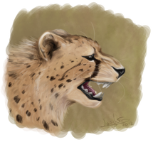 Cheetah Challenge by Thilil