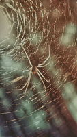 Spider by Irkis