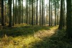 Forest Stock 45 by Sed-rah-Stock