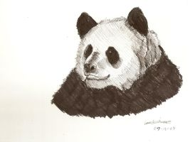 Panda Crosshatch by vincentwolf