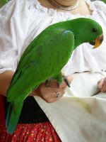 Green Parrot by chamberstock