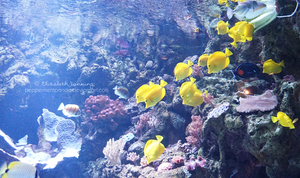Aquarium Photo 3 by PeppermentPanda