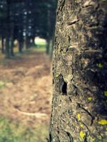 Trees :} by AwakeYourSoul