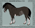 Iaranncapall Import 91 by AhernStables