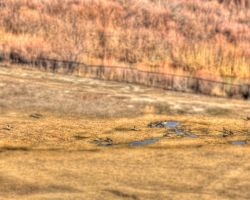 Geese HDR and Tilt Shift by LycanDID