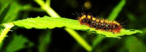 Caterpillar by AmyMaeFeely