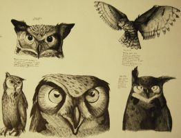 study of owls by KaRobot