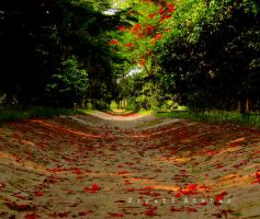 unwinded path by Photoloaded